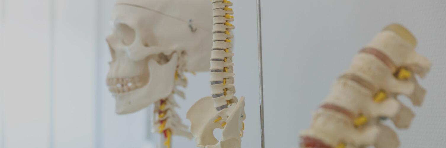 Skelett beim Orthopäden in Freiburg